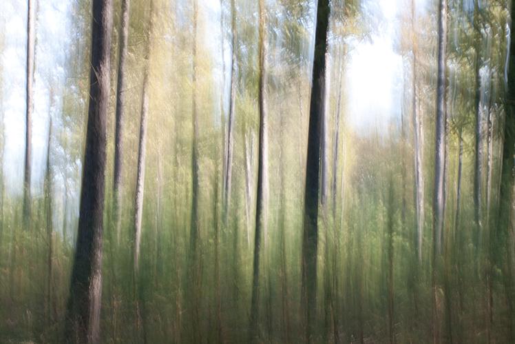 natuur-in-beweging-2 - [c] Marcel Borgstijn